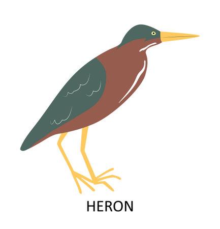 Illustration with American Green Heron. Cute cartoon character Illusztráció
