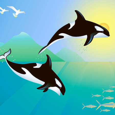 Killer whales hunting a fish group Vector