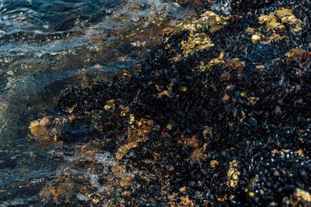 Mussels Colony on the Sea Shore Rocks 스톡 콘텐츠