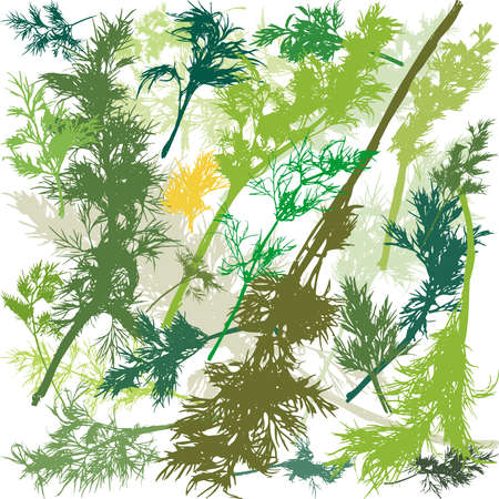 Group of Green Dill Plant in flat style Иллюстрация