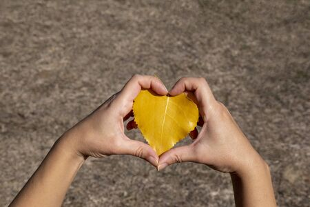 Woman hand holding autumn leaf in shape of a heart, I love autumn concept, enjoying the nature Banco de Imagens
