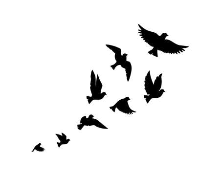 Flying birds silhouettes isolated on white background, vector. Birds illustration. Wall art, artwork, poster design. Freedom concept