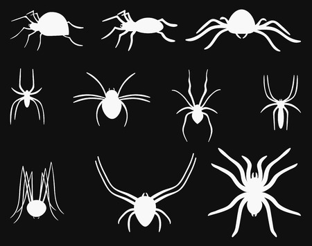 A set of spiders. Collection of black and white spiders. Vector set of insects on the Halloween. Stylized poisonous insects.