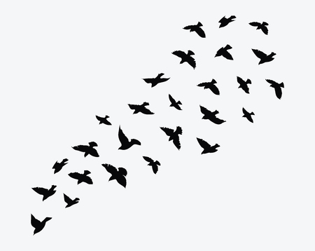 Flock of birds flying.