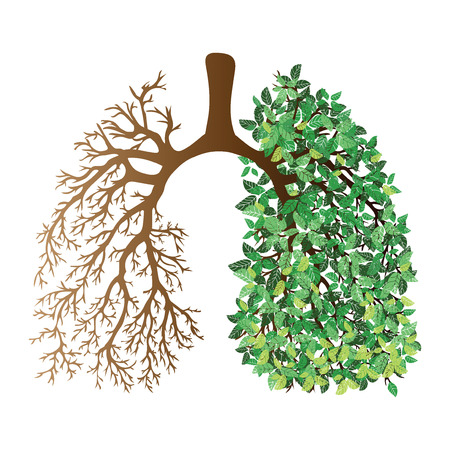 Human lungs. Respiratory system. Healthy lungs. Light in the form of a tree. Line art. Drawing by hand. Medicine. Ilustração