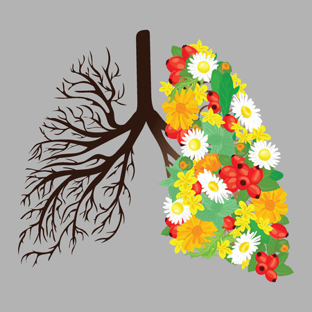 Human lungs. Respiratory system. Healthy lungs. Light in the form of a tree. Line art. Drawing by hand. Medicine. Иллюстрация