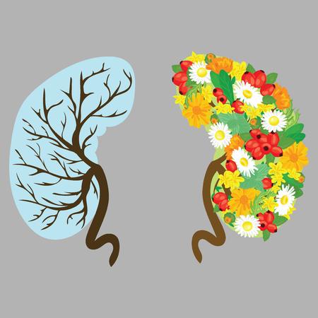 Human kidneys. Human organs with flowers. Medical vector illustration. Health.