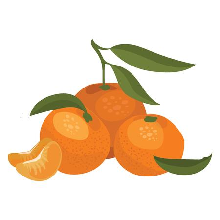 Cartoon illustration of a mandarin. Vector illustration of oranges on a white background.