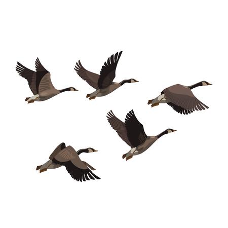 A flock of ducks. A cartoon flock of birds. Vector illustration of flying birds. Drawing for children.