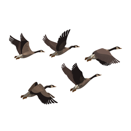 A flock of ducks. A cartoon flock of birds. Vector illustration of flying birds. Drawing for children.