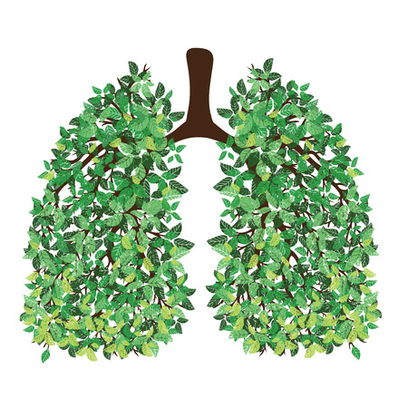 Pulmones humanos Sistema respiratorio. Pulmones sanos Luz en forma de un árbol. Arte lineal. Dibujando a mano. Ilustración de vector