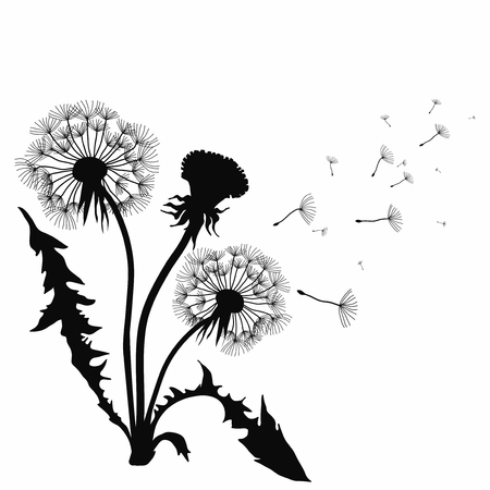 Silhouette of a dandelion with flying seeds. Black contour of a dandelion. Black and white illustration of a flower.