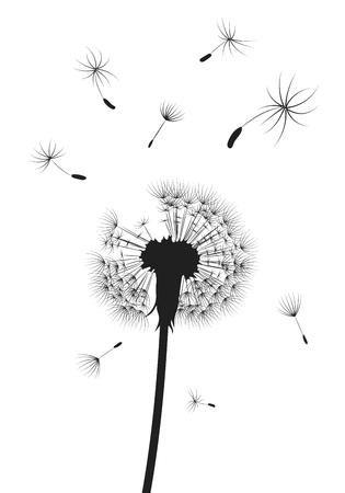 Silueta de un diente de León con semillas voladoras. Contorno negro de un diente de león. Ilustración en blanco y negro de una flor. Foto de archivo