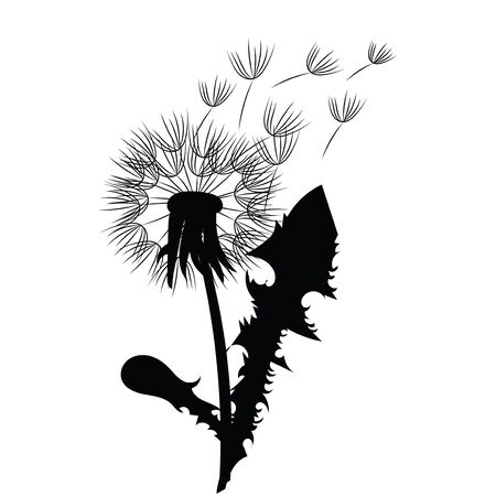 Silhouette of a dandelion with flying seeds. Black contour of a dandelion. Black and white illustration of a flower. Summer plant. Stok Fotoğraf - 129542983
