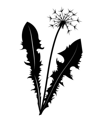 Silhouette of a dandelion with flying seeds. Black contour of a dandelion. Black and white illustration of a flower. Summer plant. Stok Fotoğraf - 129542989