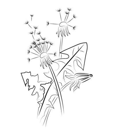 Silhouette of a dandelion with flying seeds. Black contour of a dandelion. Black and white illustration of a flower. Summer plant. Stok Fotoğraf - 129542150