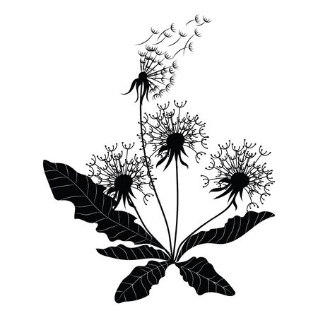 Silhouette of a dandelion with flying seeds. Black contour of a dandelion. Black and white illustration of a flower. Summer plant. Stock fotó - 129545442
