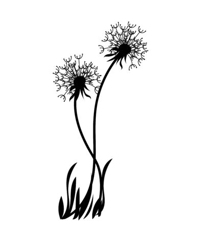 Silhouette of a dandelion with flying seeds. Black contour of a dandelion. Black and white illustration of a flower. Summer plant. Stock fotó - 129545443