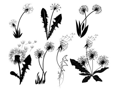 Set of dandelions. Collection of stylized dandelions. Decorative flowers. Black and white drawing. Flower bud logo. Vector illustration.