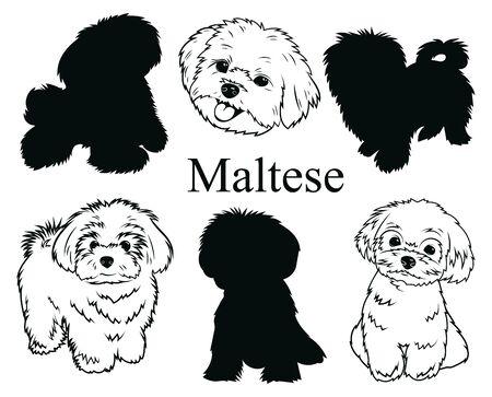 Malteser eingestellt. Sammlung von Hunden. Schwarz-Weiß-Darstellung eines maltesischen Hundes. Vektorgrafik eines Haustieres. Tätowierung.