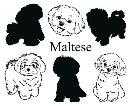 Maltese set. Collection of dogs. Black and white illustration of a Maltese dog. Vector drawing of a pet. Tattoo.
