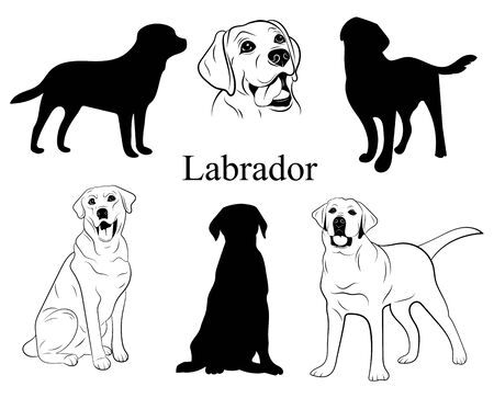 Labrador set. Collection of dogs. Black white labrador dog illustration. Vector drawing of a pet. Tattoo.