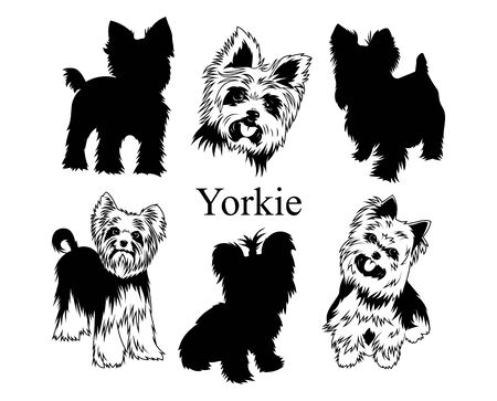 Set of yorkies. Collection of   dogs. Black white illustration of a york dog. Vector drawing of a pet. Tattoo. Illustration