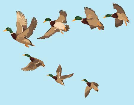 Una bandada de patos. Una bandada de pájaros de dibujos animados. Ilustración de vector de aves voladoras. Dibujo para niños. Ilustración de vector