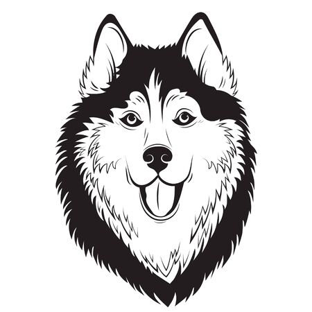 Husky. Portrait of a husky. Black and white dog head. Illustration of a pet. Tattoo. Illustration