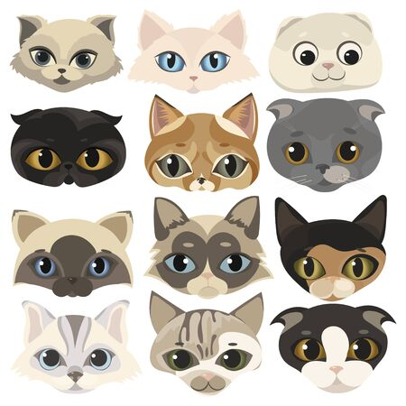 Set of cats face. Collection of cartoon kittens of different colors. Playful pets. Lovely colored cats. Vector illustration for children. Beautiful breed of kittens.