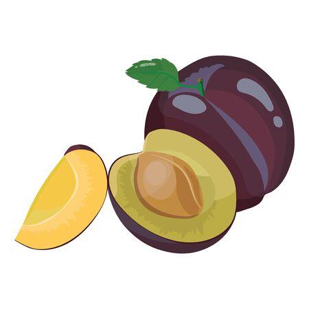 Cartoon plum. Fresh vitamin fruit. Juicy sliced fruit. Drawing for children. Illustration on white background.
