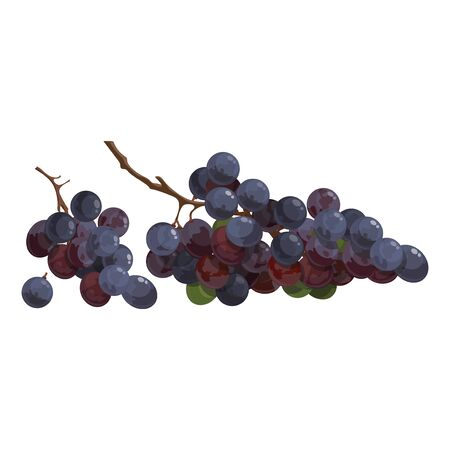 Cartoon grapes. Fresh vitamin fruit. Juicy and sweet fruit. Drawing for children. Illustration on white background.