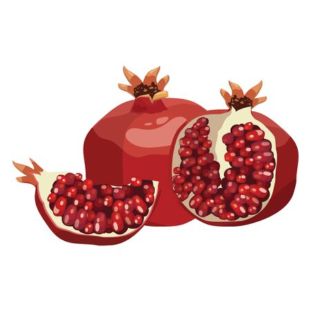Cartoon pomegranate. Illustration of a pomegranate in a cut. A juicy summer fruit on a white background. Useful vitamin exotic food.