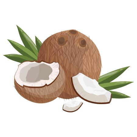 Cartoon coconut. Fresh vitamin fruit. Juicy sliced fruit. Drawing for children. Illustration on white background.