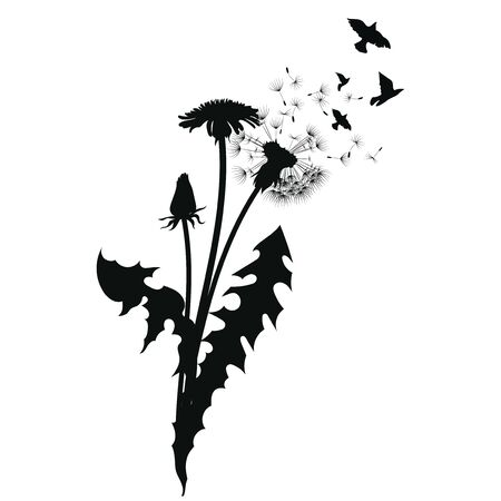 Silhouette of a dandelion with flying seeds. Black contour of a dandelion. Black and white illustration of a flower. Summer plant. Stock fotó - 130019099