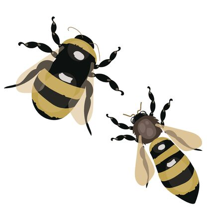 Set of vector stylized bees. Collection with a honey bee. Icons with insects. Illustration