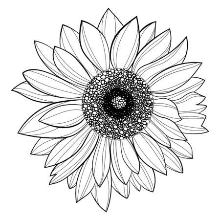 Sonnenblume Blume. Schwarz-Weiß-Darstellung einer Sonnenblume. Lineare Kunst. Blühende Sonnenblume tätowieren.