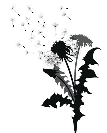 Silhouette of a dandelion with flying seeds. Black contour of a dandelion. Black and white illustration of a flower. Summer plant. Stock fotó - 130018387