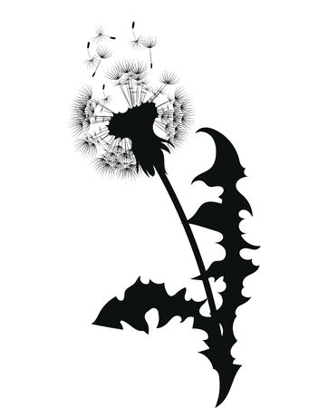 Silhouette of a dandelion with flying seeds. Black contour of a dandelion. Black and white illustration of a flower. Summer plant. Stock fotó - 130017836
