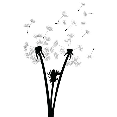 Silhouette of a dandelion with flying seeds. Black contour of a dandelion. Black and white illustration of a flower. Summer plant. Stock fotó - 130017517