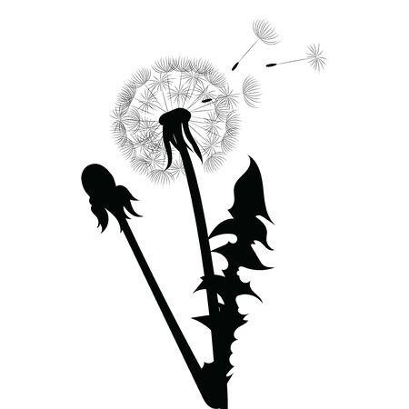 Silhouette eines Löwenzahns mit fliegenden Samen. Schwarze Kontur eines Löwenzahns. Schwarzweiss-Illustration einer Blume. Sommerpflanze.
