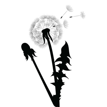 Silhouette of a dandelion with flying seeds. Black contour of a dandelion. Black and white illustration of a flower. Summer plant. Stockfoto - 130017521