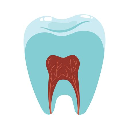 A healthy tooth in a cut. Hygiene of the oral cavity. Vector illustration for dental clinic.
