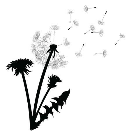 Sagoma di un dente di leone con semi volanti. Contorno nero di un dente di leone. Illustrazione in bianco e nero di un fiore. Pianta estiva. Vettoriali