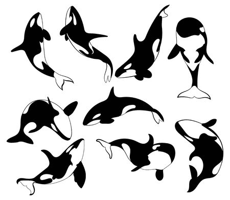 Set of killer whales. Collection of stylized orca whale. Black white vector illustration of sea predatory fish. Tattoo.
