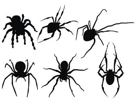 Set of spiders. Collection of black and white spiders. Vector set of insects on the Halloween. Stylized poisonous insects. Vector illustration.