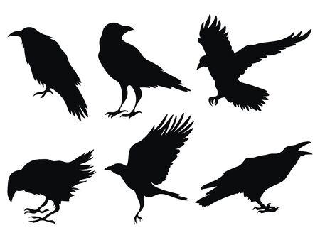 Insieme dei corvi. Una collezione di corvi neri. Siluetta di un corvo volante. Illustrazione vettoriale di sagoma di corvi. Tatuaggio dell'uccello del grunge. Vettoriali