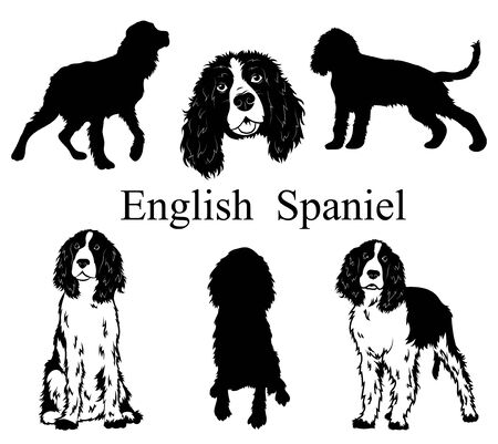 English spaniel set. Collection of pedigree dogs. Black white illustration of a english spaniel dog. Vector drawing of a pet. Tattoo. 矢量图像