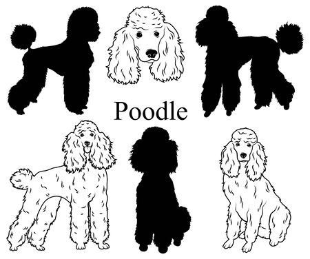 Poodle set. Collection of pedigree dogs. Black white illustration of a classic poodle dog. Vector drawing of a pet. Tattoo.