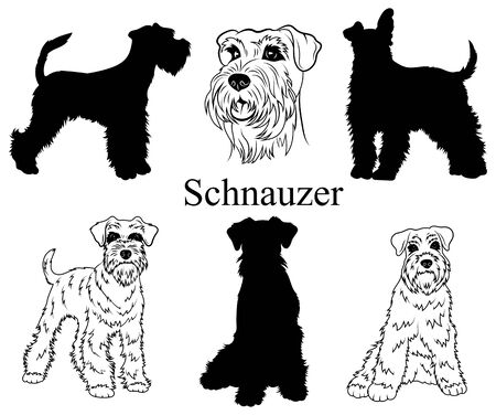 Schnauzer set. Collection of pedigree dogs. Black white illustration of a schnauzer dog. Vector drawing of a pet. Tattoo.